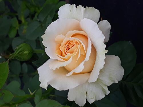 Гульнара Цветочная