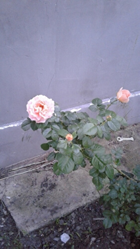 Галюся Радионова